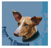 Ayuda para perros abandonados