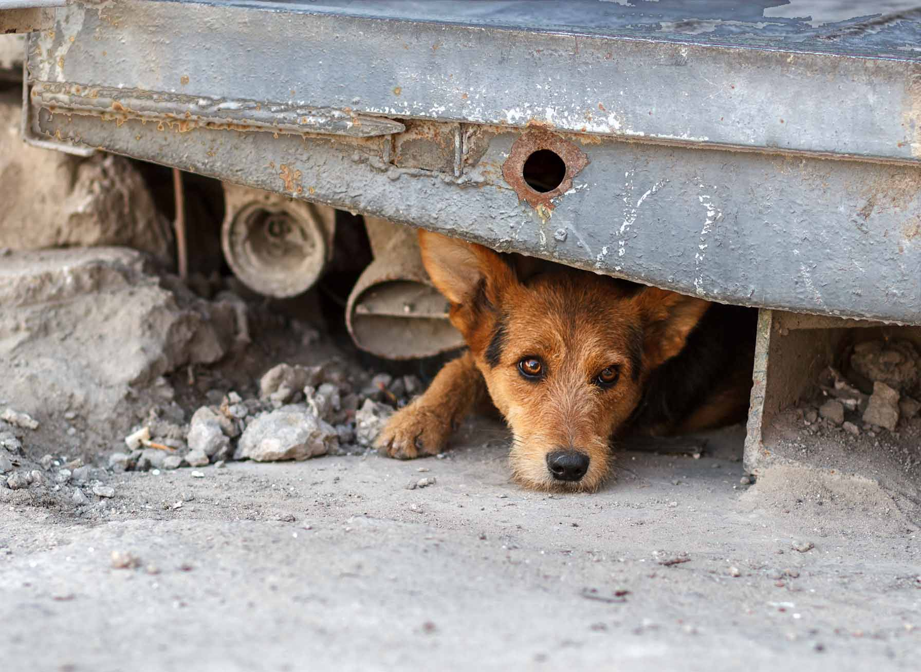 Protectoras Animales Perros Sin Fronteras Gran Canaria